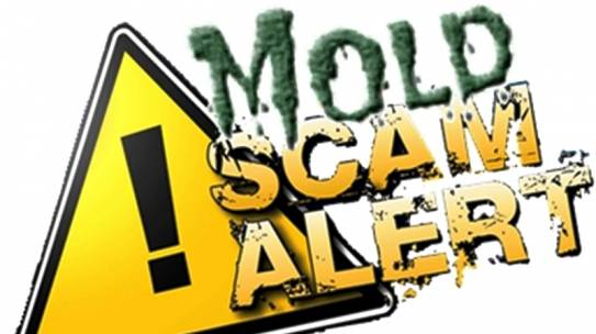 Newlyweds Sue Realty and Others for Mold Fraud